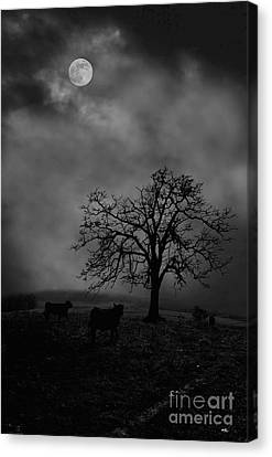 Moonlite Tree On The Farm Canvas Print by Dan Friend