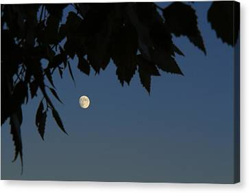 Moonrise Canvas Print by Andrea Kappler