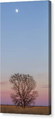 Canvas Print featuring the photograph Moonrise Over Blackbirds by Rob Graham