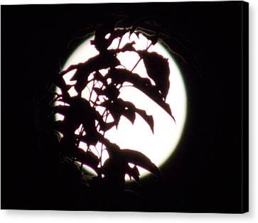 Moonshine 10 Evasion Canvas Print