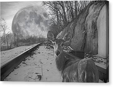 Moonshine Deer Tracks Canvas Print