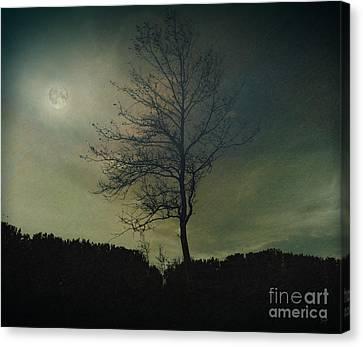 Moonspell Canvas Print by Bedros Awak