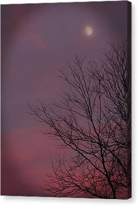 Moonstruck Canvas Print by Teresa Schomig