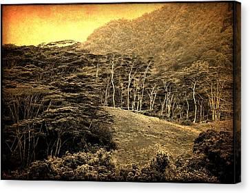 Moorea Landscape Canvas Print