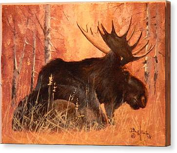 Moose At Rest Canvas Print