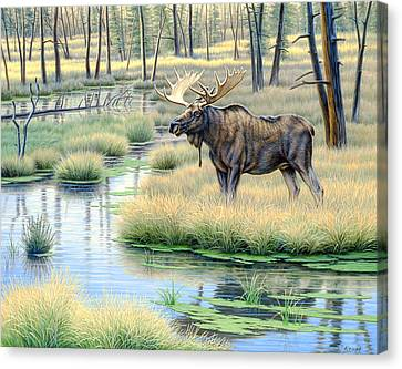 Moose Country Canvas Print by Paul Krapf