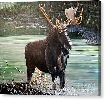 Moose County Canvas Print