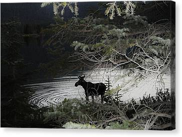 Moose Has Happy Hour Canvas Print by Cathy Long