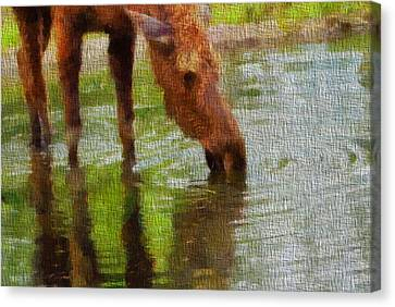 Moose On Canvas Canvas Print by Dan Sproul