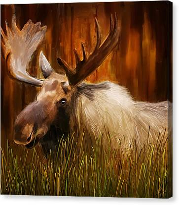 Moose Solitude Canvas Print by Lourry Legarde