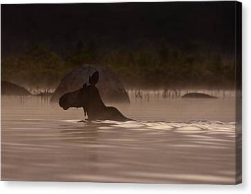 Water Scene Canvas Print - Moose Swim by Brent L Ander