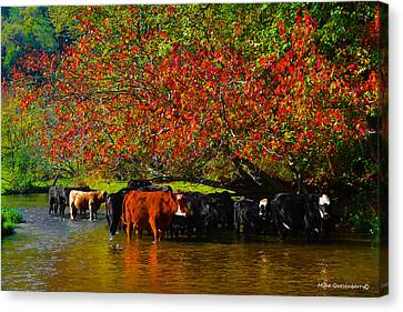 Mooving Into Fall Canvas Print by Mike  Quesinberry