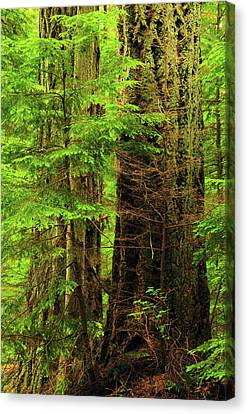 Moran Canvas Print - Moran State Park, Washington, Usa by Michel Hersen