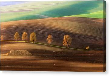 Moravian Trees Canvas Print
