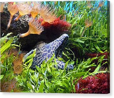 Moray Underwater Canvas Print by Tilen Hrovatic