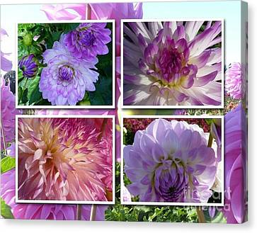 More Dahlias Canvas Print by Susan Garren