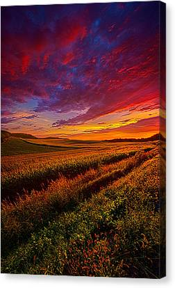 More Than A Feeling Canvas Print by Phil Koch