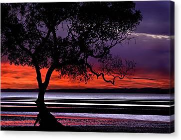 Moreton Bay View Canvas Print