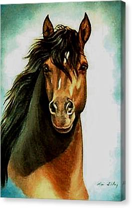 Canvas Print featuring the painting Morgan Horse by Loxi Sibley