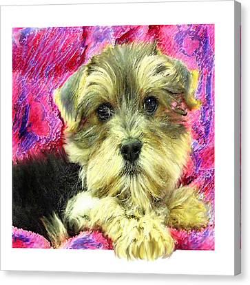 Morkie Puppy Canvas Print by Jane Schnetlage