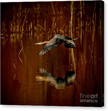 Cabin Window Canvas Print - Heron Flying Through Rusty Bog by Robert Frederick