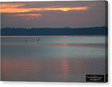 Canvas Print - Morning Beauty 1 by Paul SEQUENCE Ferguson             sequence dot net