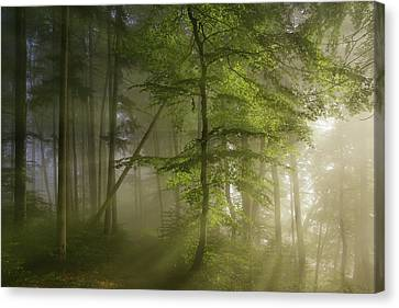Lush Foliage Canvas Print - Morning Beauty by Norbert Maier