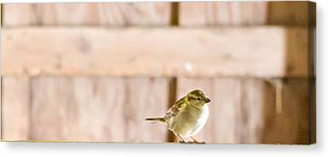 Canvas Print featuring the photograph Morning Bird by Courtney Webster