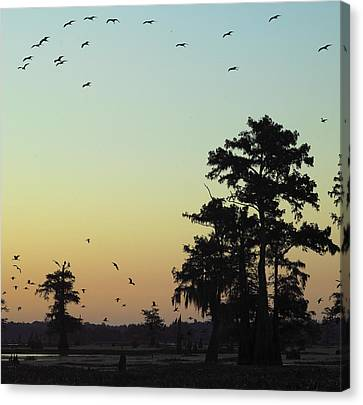 Canvas Print featuring the photograph Morning Birds by Silke Brubaker