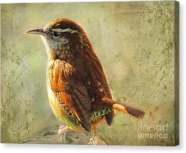 Morning Carolina Wren Canvas Print by Debbie Portwood