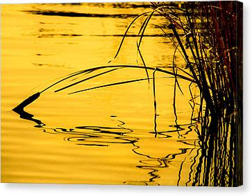 Morning Cattails Canvas Print