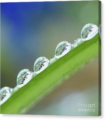 Morning Dew Drops Canvas Print by Heiko Koehrer-Wagner