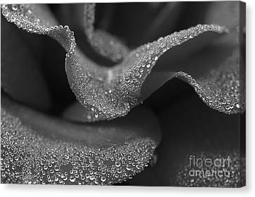 Canvas Print featuring the photograph Morning Dew by Inge Riis McDonald