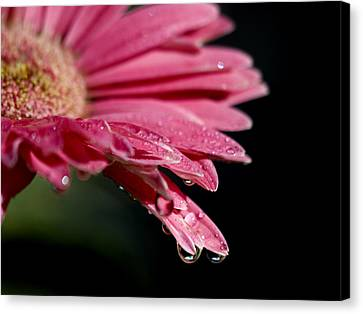 Canvas Print featuring the photograph Morning Dew by Joe Schofield
