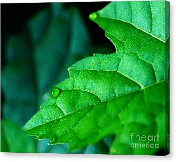 Canvas Print featuring the photograph Morning Dew by JRP Photography