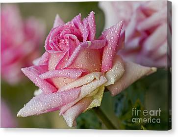 Morning Dew Canvas Print by Nick  Boren
