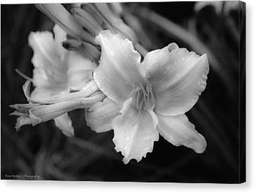 Canvas Print featuring the photograph Morning Dew On Lilies by Ross Henton