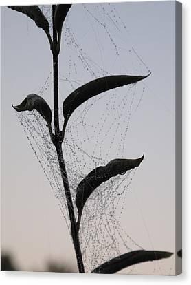 Morning Dew On Spiderweb Canvas Print