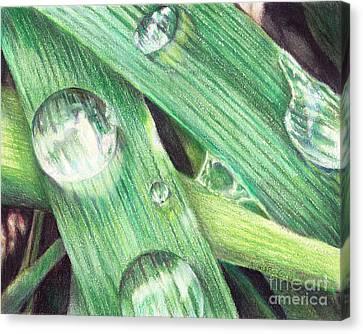 Morning Dew Canvas Print by Shana Rowe Jackson