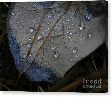 Morning Dew Canvas Print by Steven Valkenberg