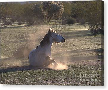 Canvas Print featuring the photograph Morning Dust Bath by Ruth Jolly