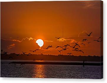 Canvas Print featuring the photograph Morning Flight by RC Pics