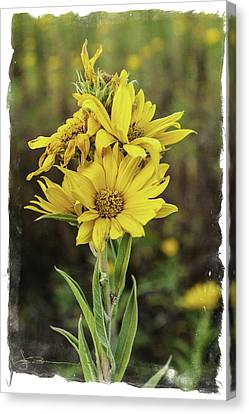 Morning Flowers Canvas Print