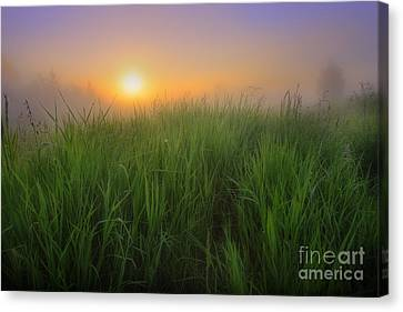 Morning Fresh Canvas Print by Dan Jurak
