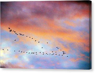 Morning Geese Canvas Print