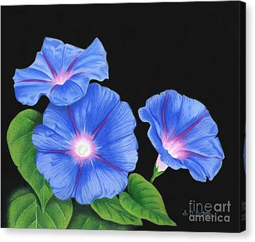 Morning Glories On Black Canvas Print by Sarah Batalka