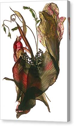 Morning Glory Canna Heart Canvas Print by Julia McLemore