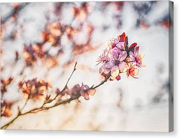 Canvas Print featuring the photograph Morning Glory by Joshua Minso
