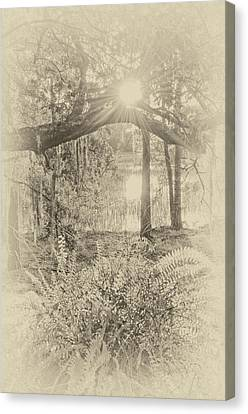 Canvas Print featuring the photograph Morning Glory by Margaret Palmer