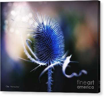 Morning Glory Canvas Print by Mo T